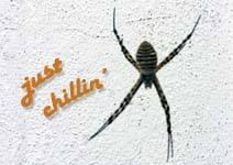 Madeira - Spider