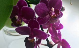 basic orchid care for beginners