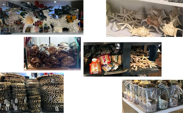 a collage of photos from Male airport which sells coral, sand, shells, starfish and lufus