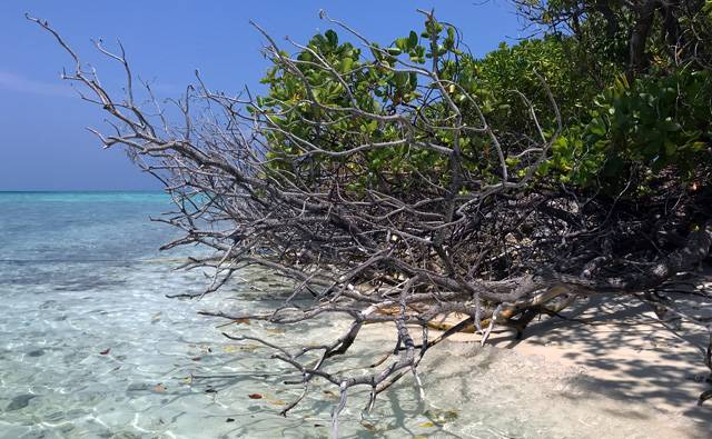 vegetation extending over the coral sand towards the sea on Makanudu Island in the Maldives